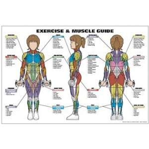 Exercise and Female Muscle Guide Laminated Fitness Poster