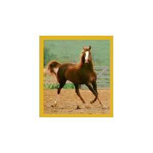New Magnetic Bookmark Showing Off / Horse High Quality Modern Design