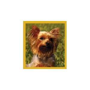 New Magnetic Bookmark Yorkshire Terrier High Quality