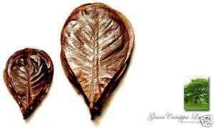 Catappa Leaf for JBJ Asia Biotope BlackWater Aquarium