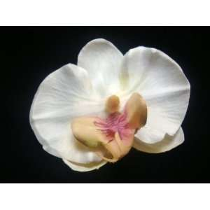 Stunning Ivory Orchid Flower Hair Clip Beauty