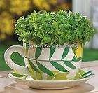 Medieval Herber Indoor Mini Herb Garden Kit Grows Fast