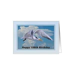 Happy Birthday, 100th, Royal Tern Bird Card Toys & Games