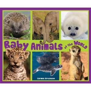 Baby Animals of the World (Natures Baby Animals) [Paperback] Carmen